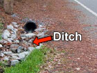 Ditch Image