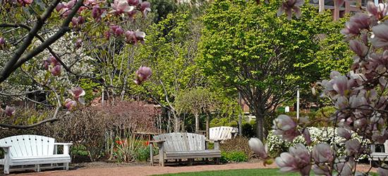 Queen Elizabeth Jubillee II Garden