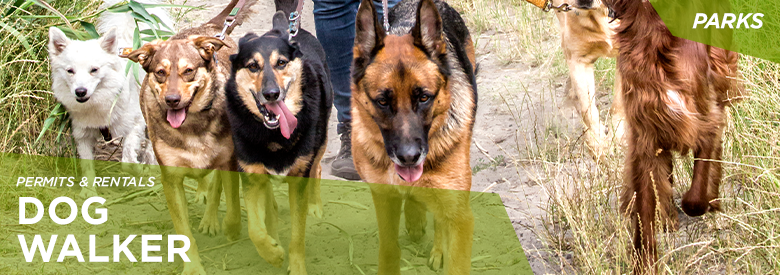 City of Mississauga Parks and Forestry - Dog Walker