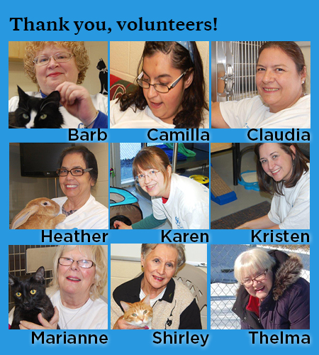 photo collage of nine volunteers